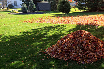 Leaves piled up ready for removal during a fall yard cleanup service