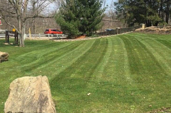A lawn mowed by our team with professional lawn stripping.